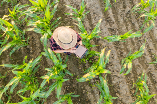 Do You Have Good Farm and Ranch Insurance in Burleson TX?